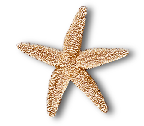 FOB Starfish Orange